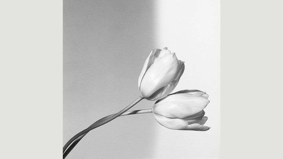 Mapplethorpe's flower pictures are rigorously composed to achieve an aura of cool detachment (Credit: Robert Mapplethorpe Foundation/Phaidon)