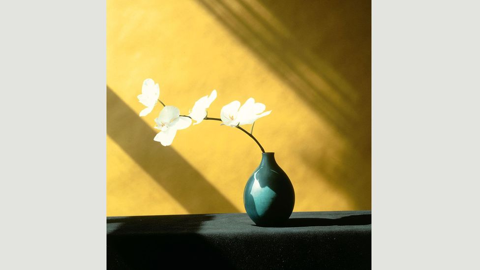 Mapplethorpe hoped his flower pictures would make people see his overtly sexual photos in a different light (Credit: Robert Mapplethorpe Foundation/Phaidon)