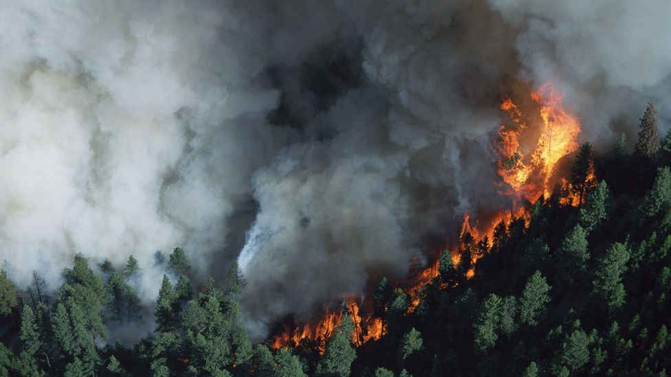 Fires in remote forested areas are often very difficult to control (Credit: Getty Images)