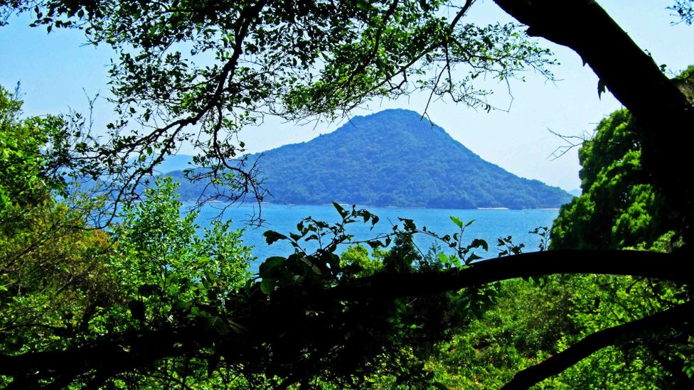 Japan's Ninoshima Island in Hiroshima Bay (Credit: Angeles Marin Cabello)