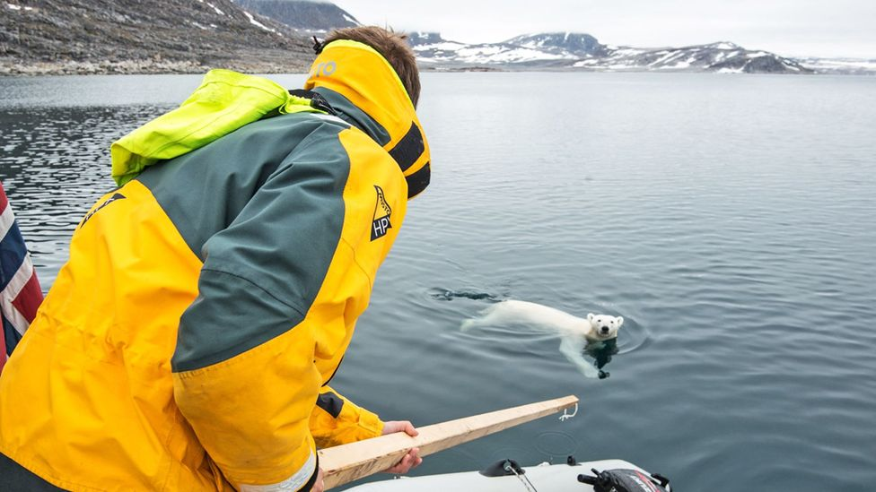A polar bear made repeated attempts to approach the boat. (Credit: Daniel Hug)