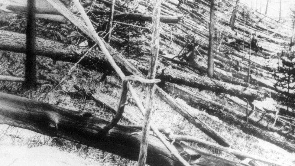 In 1908, a meteorite caused widespread devastation in the Tunguska region of Siberia (Credit: Science Photo Library)