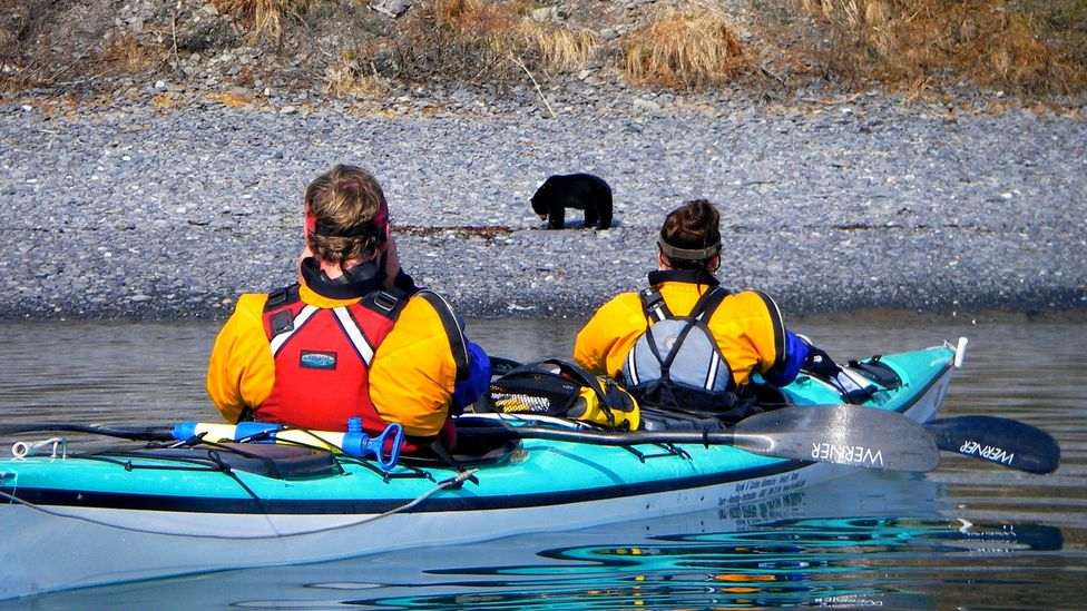 Aialik Bay is an ideal place to spot wildlife (Credit: Kayak Adventures Worldwide)