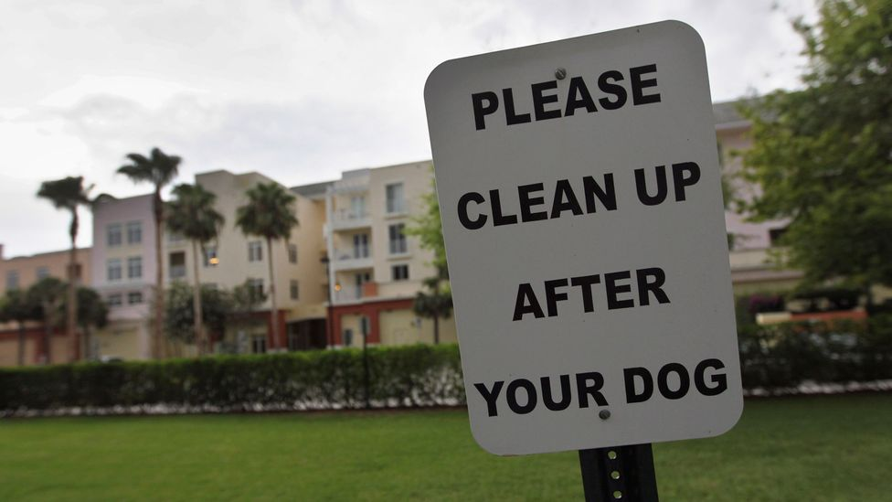 Nearly 3,000 apartments, mostly in North America, have signed up to the Poo Prints service, which runs DNA tests of dog droppings. (Credit: Joe Raedle/Getty Images)