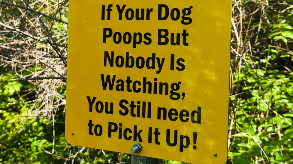 """Are you a """"poo-petrator""""? (Credit: Alamy)"""