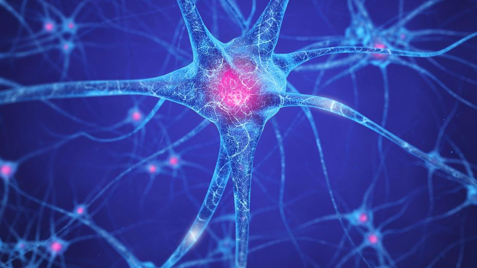 Working 25 hours a week was the optimum amount of time for cognitive functioning, while working less than that affected the agility of the brain, researchers found (Credit: Alamy)
