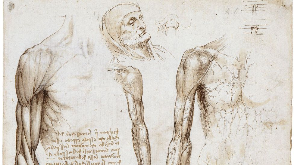 Da Vinci dissected around 30 bodies and drew them by candlelight, with a piece of cloth covering his mouth and nose (Credit: The Royal Collection)