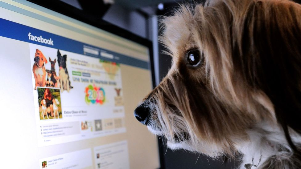 Even the canines are getting in to social media in Lille, France (Credit: Denis Charlet/AFP/Getty Images)