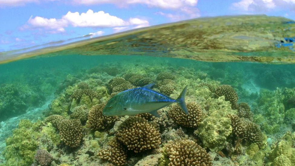 Papahānaumokuākea is a wonderland of diversity, home to rare corals and fish (Credit: NatPar Collection/Alamy)