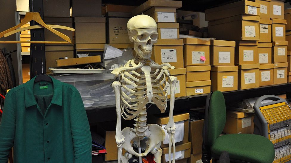In the office of the Museum of London's osteology department, boxes of human skeletons line the shelves (Credit: Amanda Ruggeri)