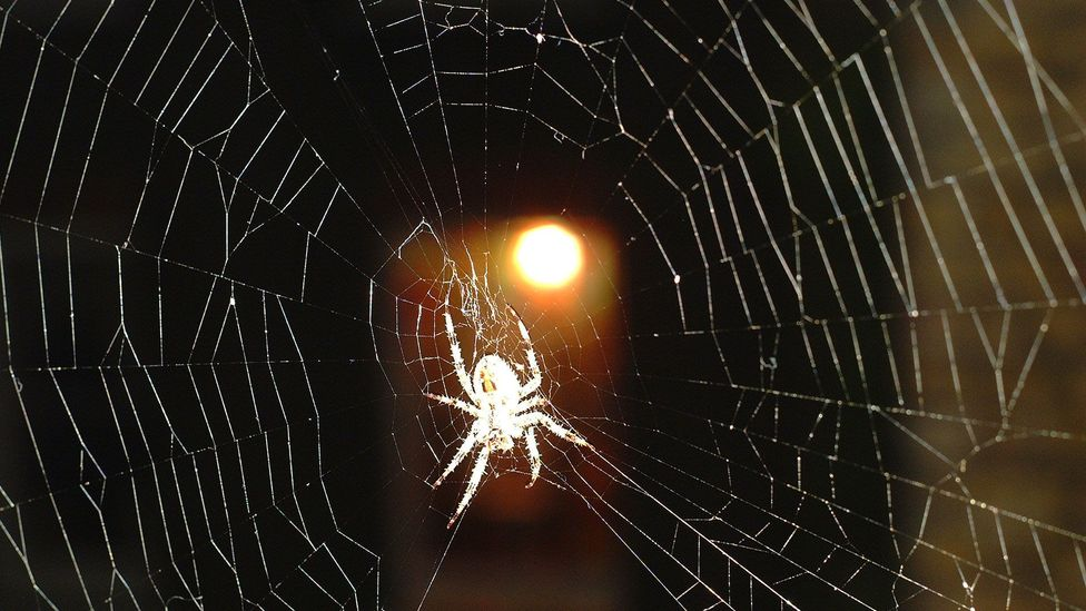 It makes evolutionary sense for us to be primed to notice threats - such as potentially poisonous spiders - within our environment (Credit: iStock)