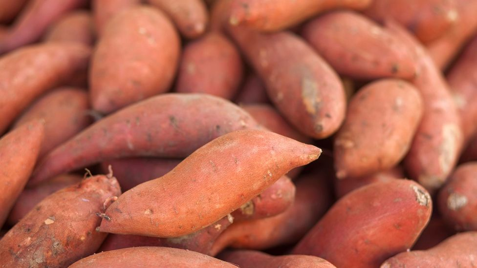 Some communities continue to grow ancestral  varieties of crops like yams – ones which could resist effects of climate change (Credit: iStock)