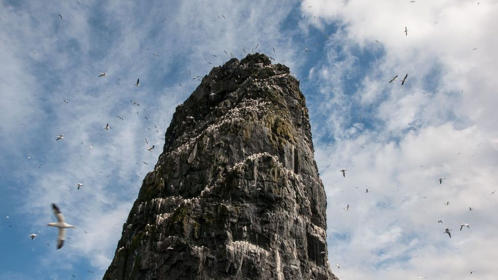 Gannets swirled around Stac an Armin, the tallest sea stack in all of Britain (Credit: Amanda Ruggeri)
