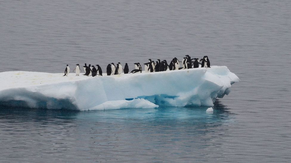 You only hear sounds in snatches – when you stumble into the middle of a penguin colony, or the ice cracks and sends part of a glacier plunging into the ocean (Credit: Getty)