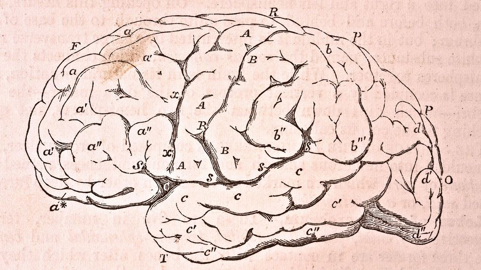 We have around 100 billion neurons, giving us a huge brain compared to our relatively puny bodies (Credit: Getty Images)