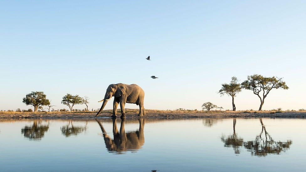 Elephants can recognise their own reflection (Credit: Getty Images)