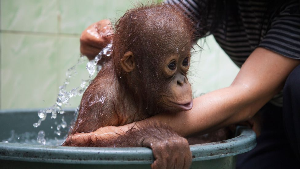 Working at an animal sanctuary sounds dreamy but the behind-the-scenes work can often be difficult and heartbreaking (Credit: Alamy)