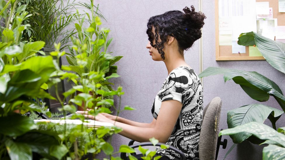 Plants in the office make people happier and more productive, research shows (Credit: Alamy)