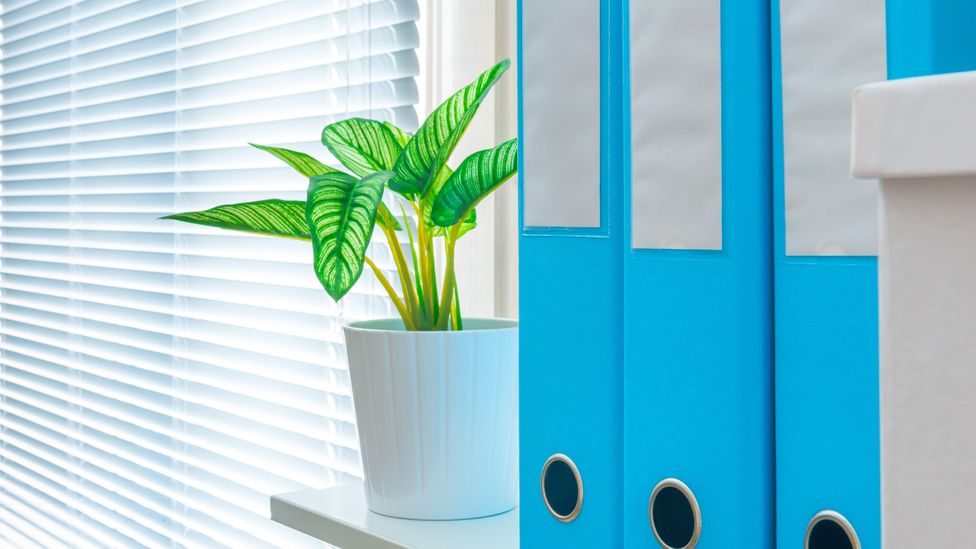 Incorporating nature into your office doesn't have to be a costly exercise (Credit: Alamy)