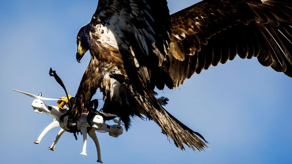 Drones are difficult to shoot down so other options such as using nets, rubber balls or trained eagles are being explored (Credit: Getty Images)