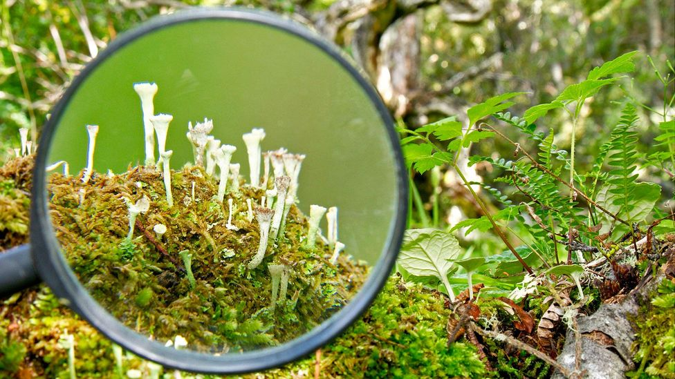 Omora Park visitors are encouraged to explore these miniature forests with magnifying glasses (Credit: Adam Wilson)