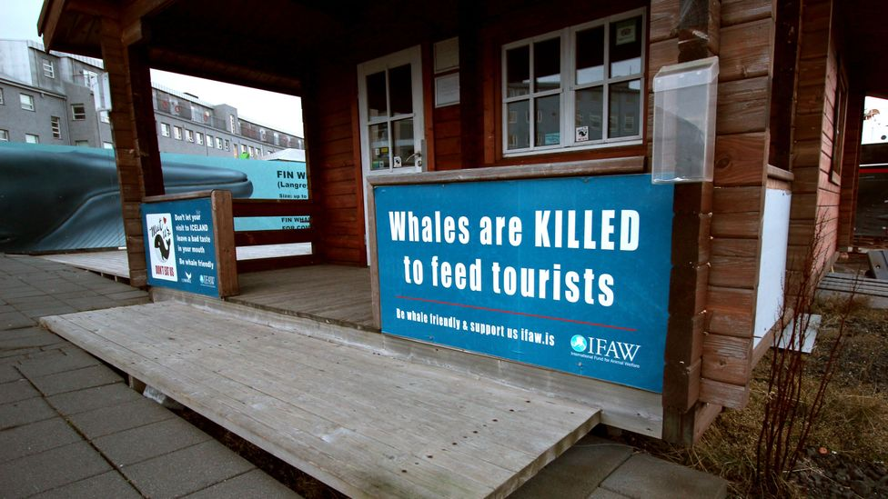 Minke whale meat is popular with some tourists – but tourism is not a driving factor in Iceland's whale-hunting quota, as this sign suggests (Credit: Chris Baraniuk)