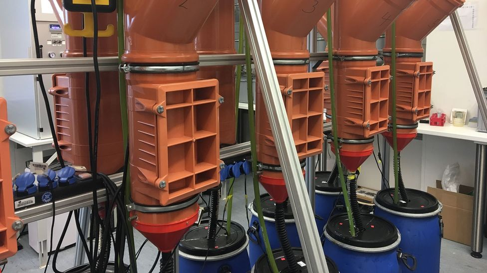 Though the laboratory is full of tanks containing urine, there is little smell thanks to it being broken down by bacteria (Credit: Richard Hollingham)