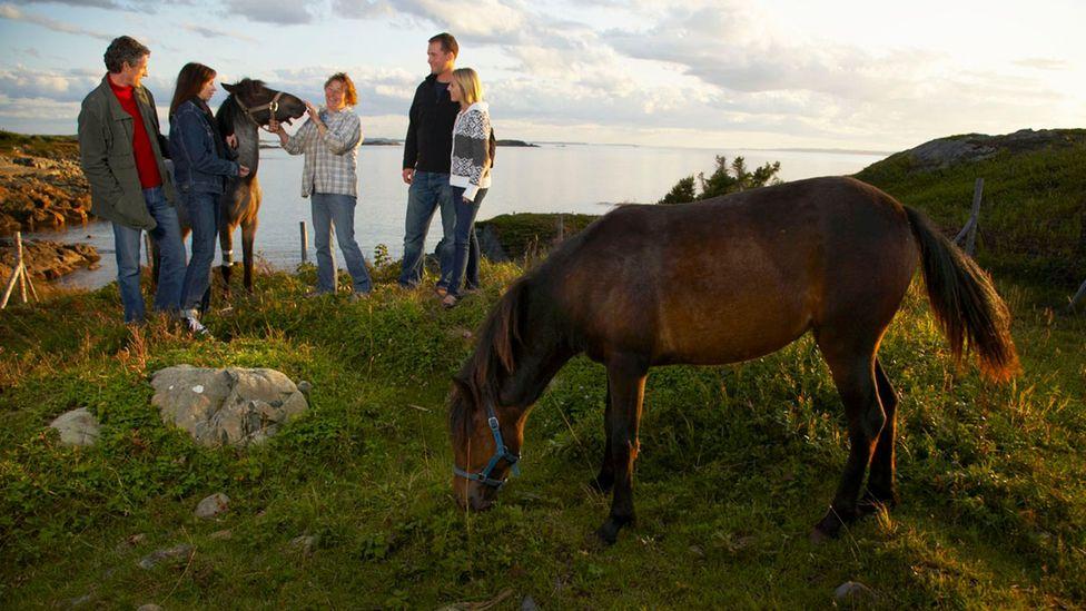 Newfoundland, ponies