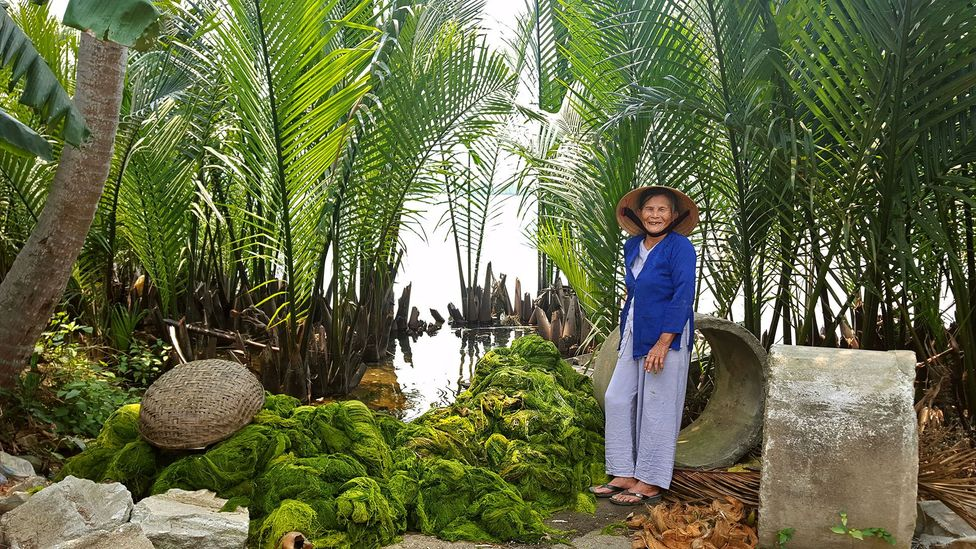 Nipa palms are the only palms adapted to salty coastal waters (Credit: Cam Thanh's Women Union)