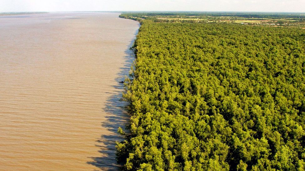 Mangrove forests protect coastlines by acting as natural storm barriers (Credit: ©GIZ)