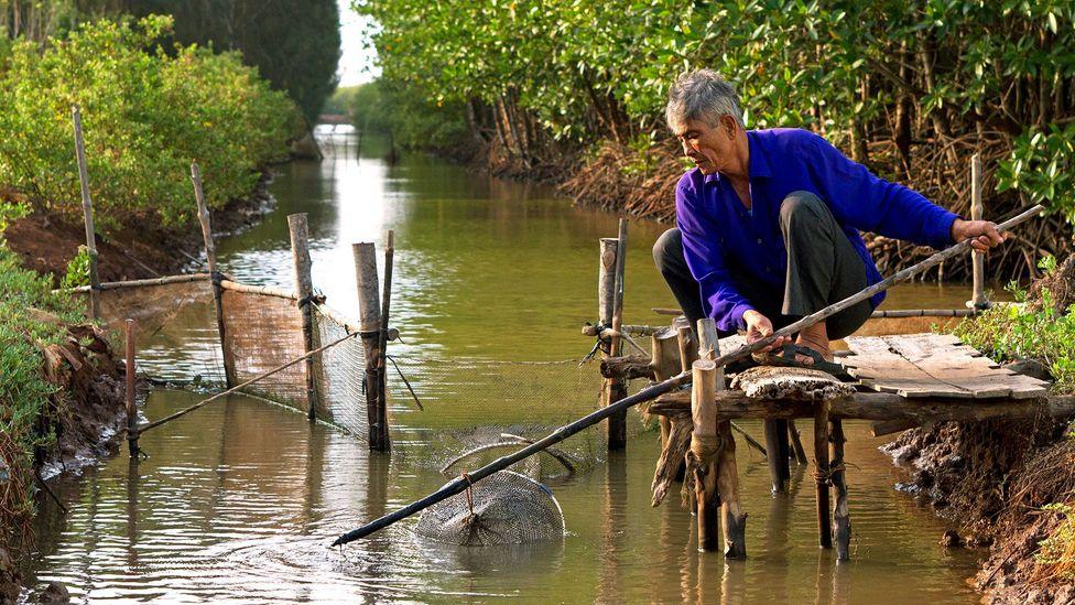 Mangrove roots filter saltwater and promote fish biodiversity (Credit: Harald Franzen/©GIZ)