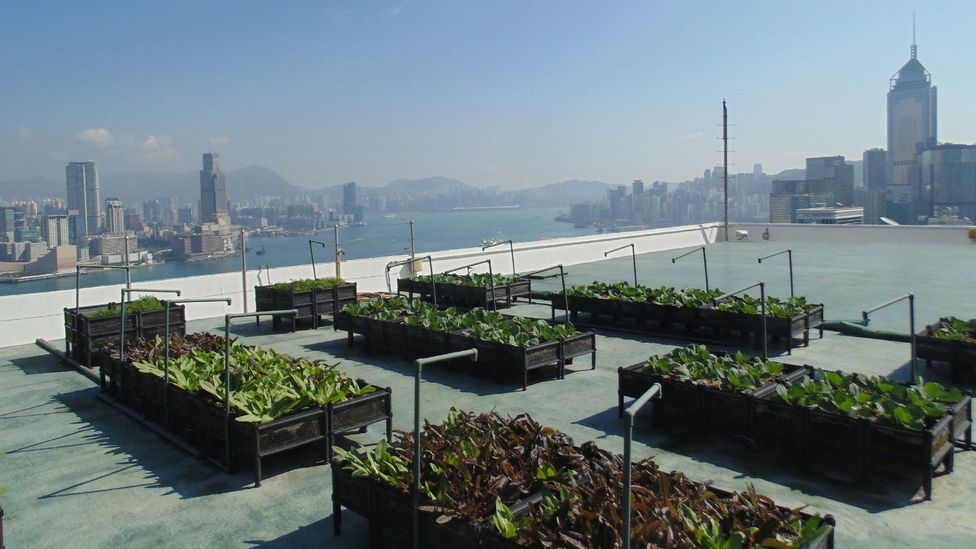 Thirty-nine stories high, the rooftop farm on the Bank of America Tower adds some much needed greenery to the concrete jungle (Credit: Robert Davies)
