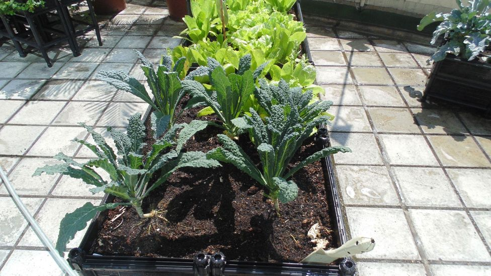 Hong Kong's climate makes it ideal for growing vegetables all year round (Credit: Robert Davies)