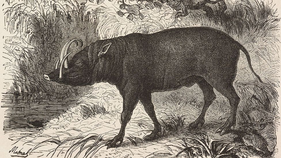 Wallace's experience with different animal species inspired his theory of natural selection (Credit: De Agostini/Biblioteca Ambrosiana/Getty)