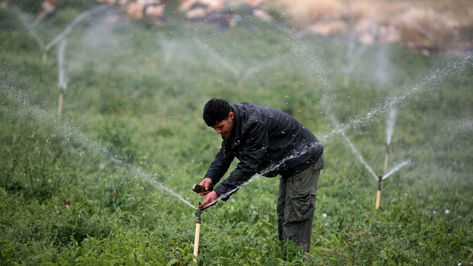 """Countries with a water surplus export """"virtual water"""" around the world - water embedded in products like wheat and meat. (Credit: Getty Images)"""