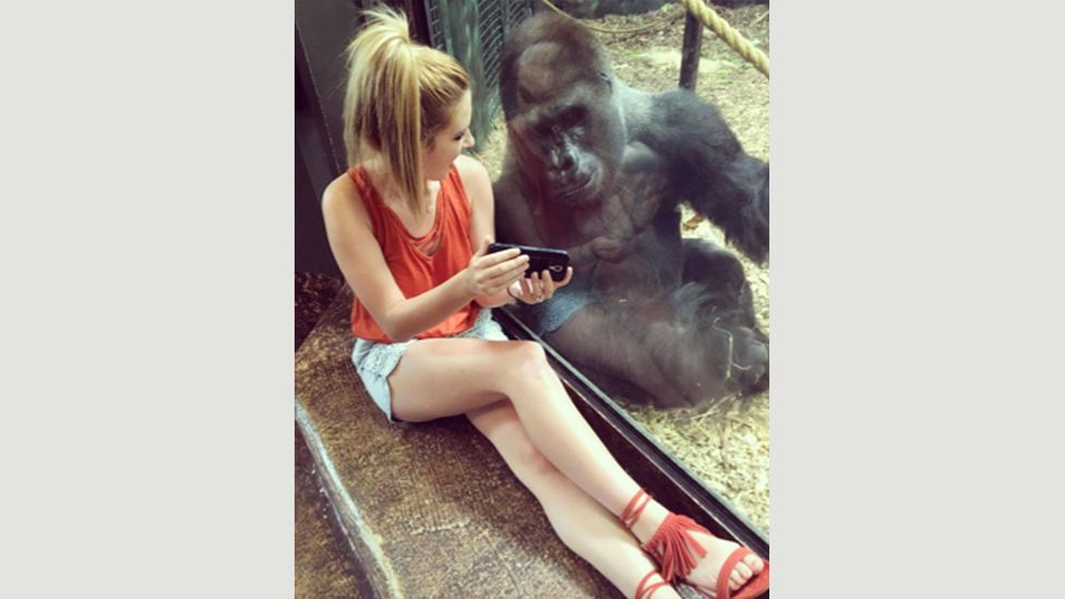 This photo of Lindsey Costello and the gorilla Jelani went viral this week after it was posted on Instagram (Credit: Lindsey Costello)