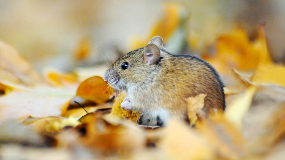 The team behind the TV show QI turn their attention to weighty matters such as a vole's love life (Credit: iStock)