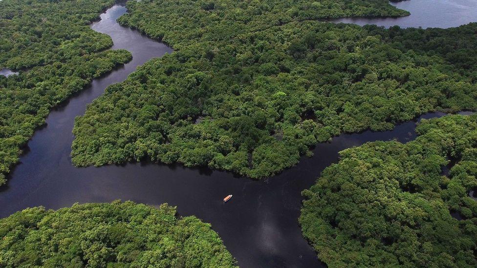 Jungle in the Amazon (Credit: iStock)