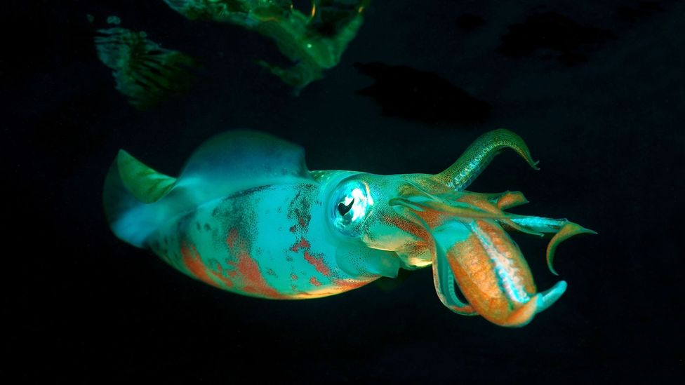 Glowing squid (Credit: Alamy)