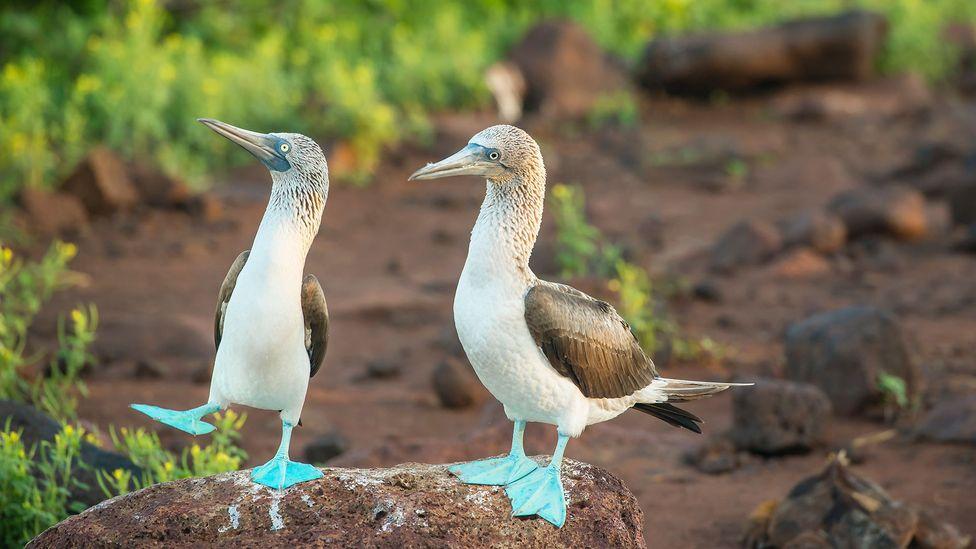 Galapagos image