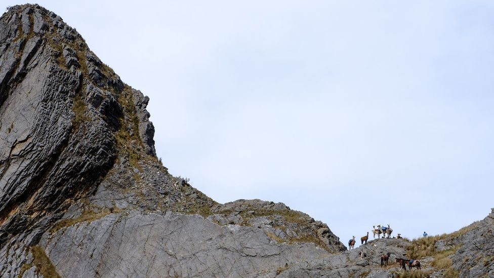 Llamas on a mountain ridge along the Qhapaq Ñan in Peru (Credit: Kevin Floerke)
