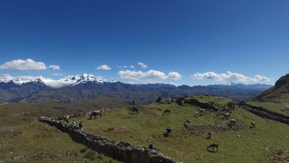 View of ruins and llamas in the Peruvian Andes (Credit: Kevin Floerke)