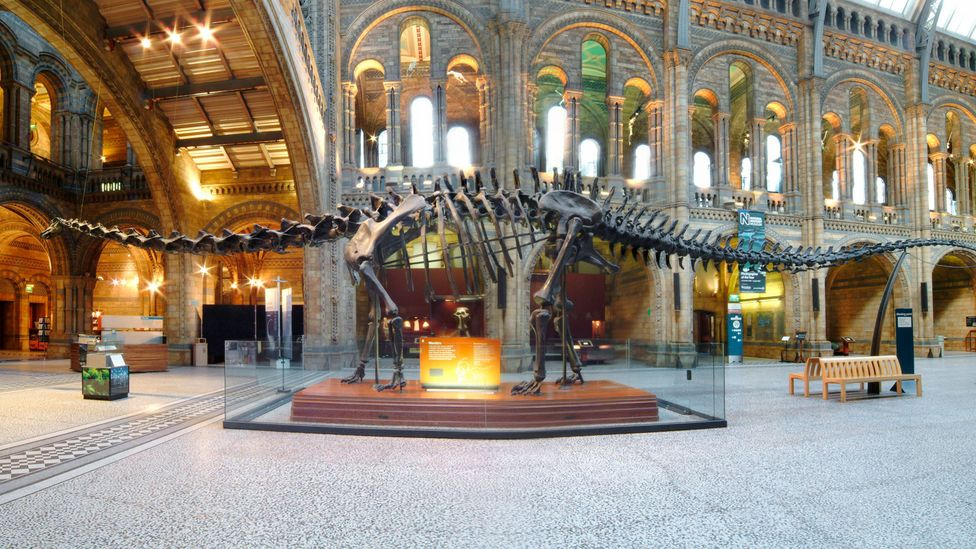 We might not need to visit a museum to see a dinosaur had the asteroid not struck (Credit: SPL)
