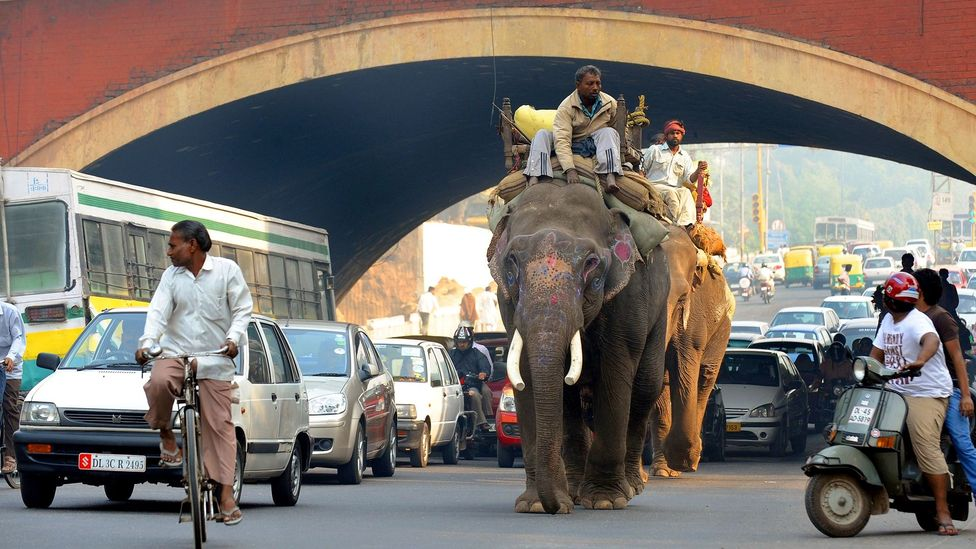 India's crowded roads provide a unique kaleidoscope of different road obstacles - like elephants - that could provide better data for self-driving AI (Credit: Getty)