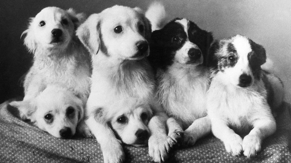 The dogs were an invaluable step towards humans successfully venturing into space (Credit: Alamy)