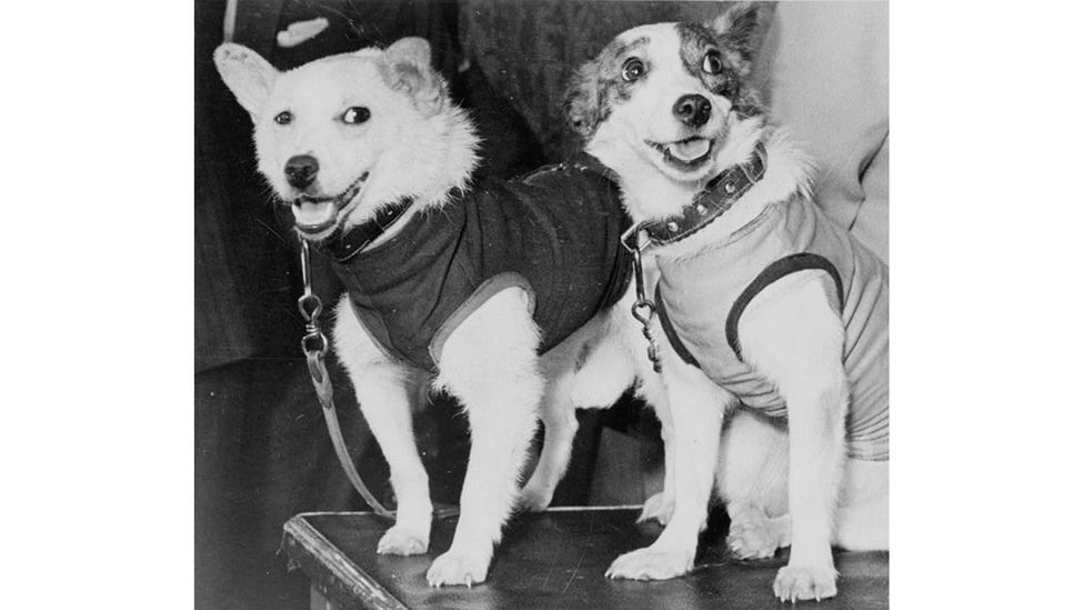 Belka and Strelka both survived their trip into space, becoming lauded around the world (Credit: Alamy)