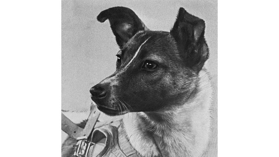 Like Sputnik, Laika became an icon of early Soviet space exploration (Credit: Alamy)
