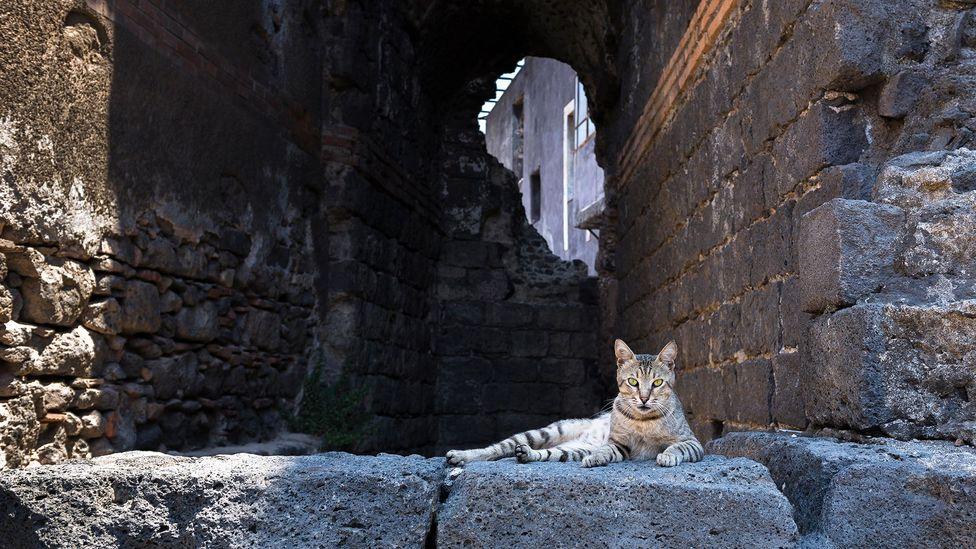 Cat, Rome, Italy