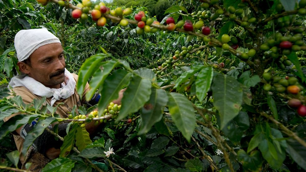 Colombia is the third largest producer of coffee in the world (Credit: Getty Images)