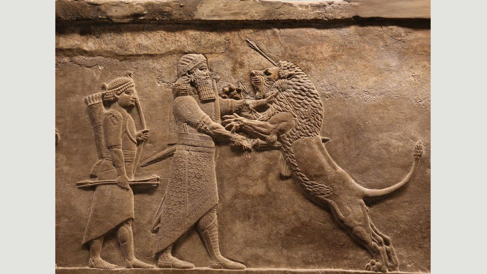 A group of wall panels depicting the royal lion hunt of Ashurbanipal is one of the treasures of the British Museum (Credit: Alamy)